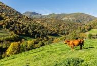 Asturias 2016