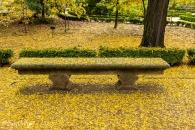 Gleditsia triacanthos, Acacia de tres espina