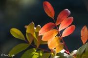 Colores otoñales
