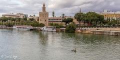 Sevilla-66