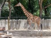 Zoo-144