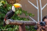 Zoo-169