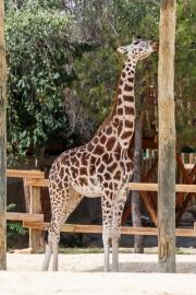 Zoo-132