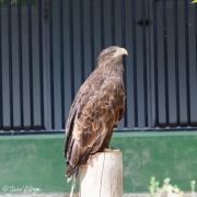 Zoo-166