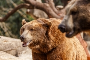 Zoo-208