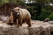 Zoo-226