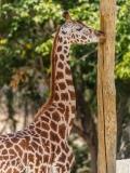 Zoo-127