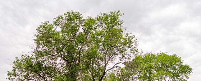 Primavera en los descampados